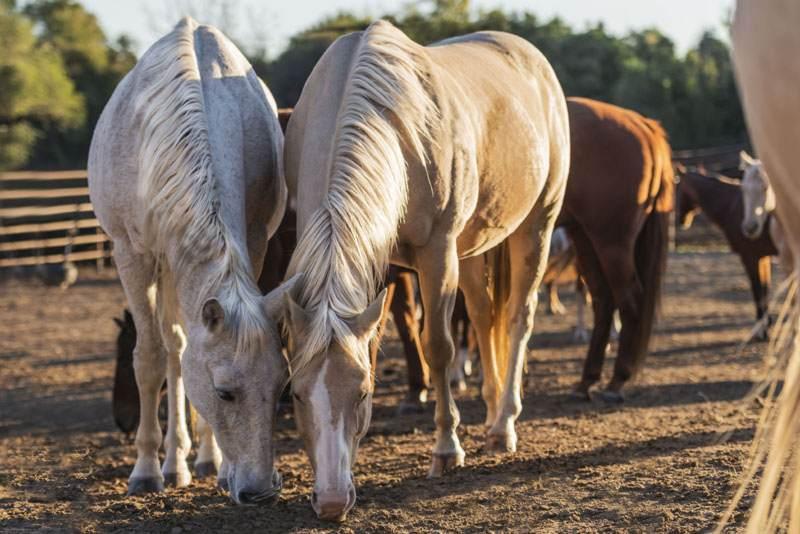 cattledrive11_6200x4100