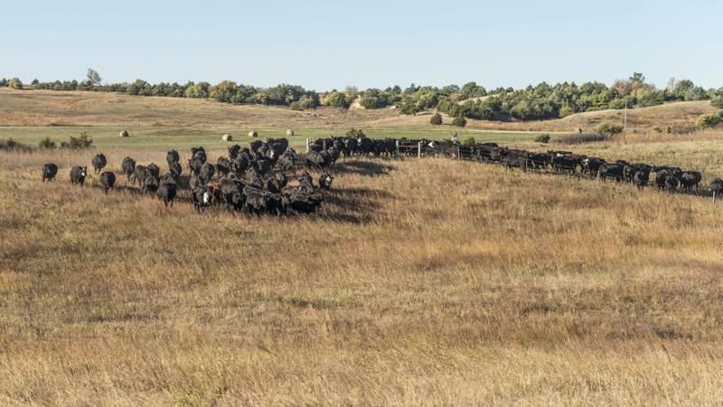 herd10_7800x4300