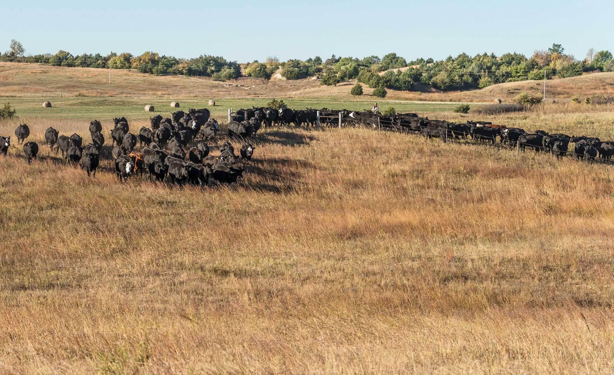 nebraska-dude-ranch2